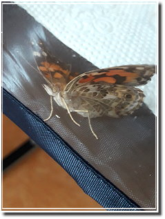 2018schmetterling08